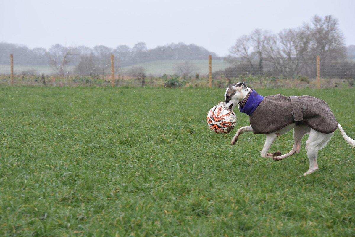 Fenced dog field Stevenage