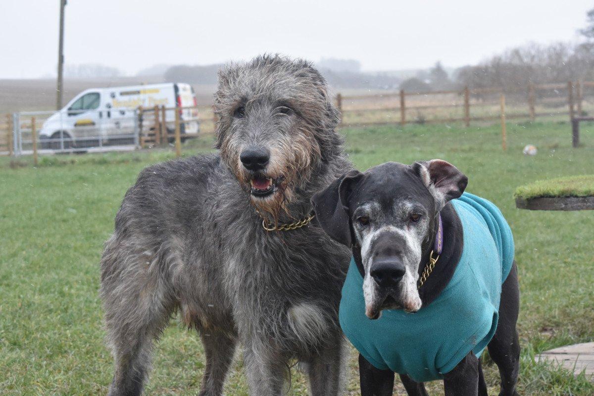 Secure dog walking Stevenage